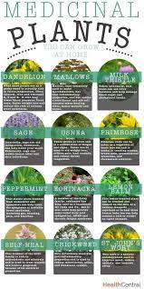 medicinal plants you can grow at home medicinal plants plants  medicinal plants you can grow at home medicinal plants plants and dan