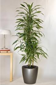 Pictures of large indoor house plants - House interior