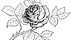 Adult Coloring Pages Flowers Flower With Roses Printable P