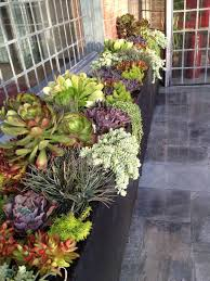 Small Picture Succulent Garden Designs Astonishing 10 Different And Great