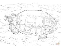 Small Picture Agassizs Desert Tortoise coloring page Free Printable Coloring Pages