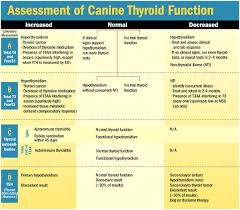 Thyroid Level Chart For Cats Thyroid Levels Chart How To Test Interpret Thyroid