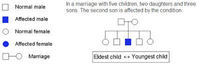 Genetic Pedigree Chart Symbols The Open Door Web Site Ib Biology Genetics Pedigree Charts