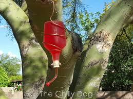 tutorial recycled bottle hummingbird feeder