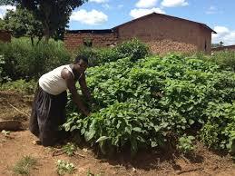 Kitchen Garden Farm Rwanda