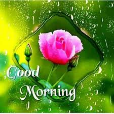 Flowers Good Morning Images Free Download Good Morning