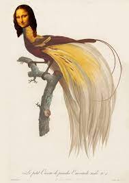 Mona Bird of Paradise | Birds of paradise, Bird illustration, Bird art