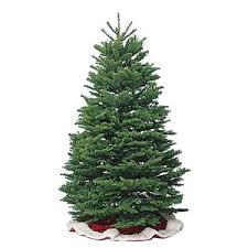 Know The Types Of Common Christmas Trees - AllYou.com