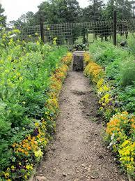 violas in the vegetable garden of p allen smith