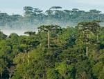 imagem de Floresta Paraná n-11