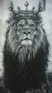 king lion iphone wallpaper free