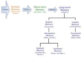 Long Term Memory Chart Types Of Memory