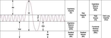 Mechanics Of Breathing Boundless Anatomy And Physiology