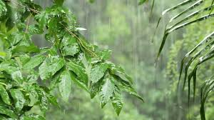 tropical rainforest raining. Fine Tropical Tropical Heavy Rain In Asian Rainforest Stock Video Footage  Videoblocks Throughout Rainforest Raining 8