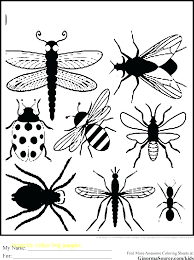 insects coloring pages insect with free printable bugs insects coloring pages insect with free printable bugs