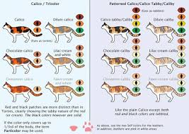 Cat Coat Color Chart The Definitive Guide To House Cats Cat Colors Cats Cat