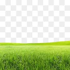 grass png.  Grass Meadow In Grass Png I