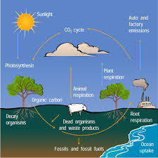 the carbon cycle com essay topics the carbon cycle