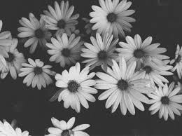 black and white flowers tumblr photography. Brilliant And Flowers Black And White Image Throughout Black And White Tumblr Photography K