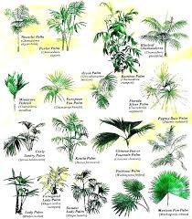common house plants identification identify indoor plant plant identification guide tropical house plants identify extraordinary ideas common house plants