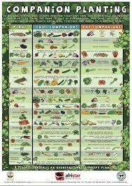 Vegetable Garden Fertilizer Chart Beginners Companion Planting Resources For Gardening