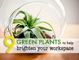 9 low maintenance plants for the office moss terrarium inhabitat green design innovation architecture green building
