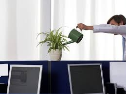 office cubicle plants. All Plants Need Water Office Cubicle F