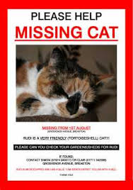 Lost Cat Flyer 21 Free Missing Cat Poster Template Word Excel Formats
