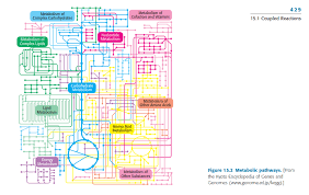 Metabolic Pathways Chart Chart Of How The Metabolic Pathways Fit Together Dataisugly