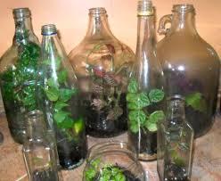 terrariums in jugs