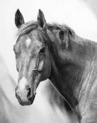 horse pencil drawing by ryan jacque