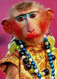 monkey wearing makeup
