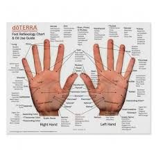 Hand Chart Mini Foot And Hand Reflexology Chart Oil Use Guide