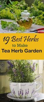Small Picture Pin by Linette Andes on Garden Herbs and more Pinterest