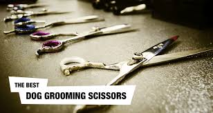 Best Dog Grooming Scissors Clippers Reviewed Here