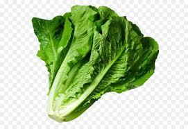 lettuce clipart. Contemporary Lettuce Lettuce Sandwich Wrap Iceberg Lettuce Clip Art  PNG Picture Intended Clipart KissPNG