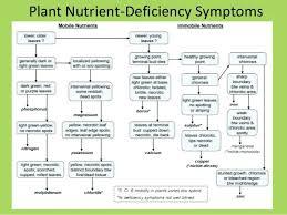Plant Nutrient Deficiency Symptoms Chart Plant Nutrient