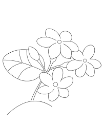 Small Picture Coloring Pages Jasmine Flower Maelukecom