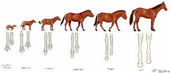 Apologetics Press Horses Did Not Evolove