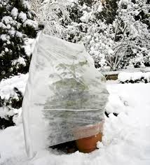 protect plants from cold temperatures as low as 76 degrees fahrenheit 60 degrees