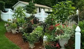 growning a garden growing gardens preschool