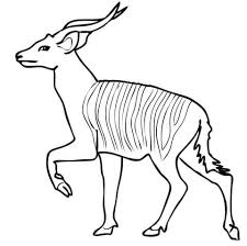 Small Picture Bongo coloring pages Free Coloring Pages