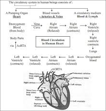 With The Help Of A Flow Chart Explain The Process Of Circulation