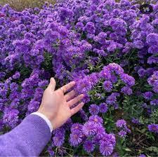 เที่ยวเกาะสีม่วง Purple Island เกาหลีใต้