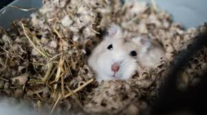 how deep should hamster bedding be