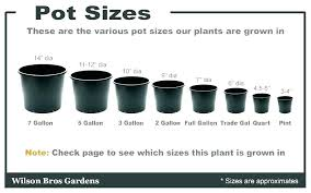 Plant Container Size Chart Developerridge Info