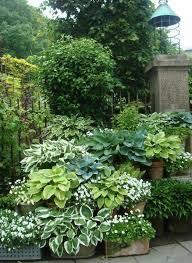 shade garden ideas for the backyard