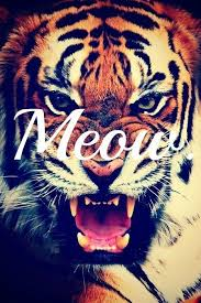 tiger roar tumblr.  Tumblr Hipster Tumblr  Buscar Con Google For Tiger Roar Tumblr L