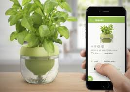 indoor herb garden planters. Smart Indoor Herb Gardens - This Pot And Plant App System Makes It Easy To Grow Garden Planters L