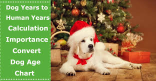 Dog Years Conversion Chart Dog Years To Human Years Calculation Importance Ways To